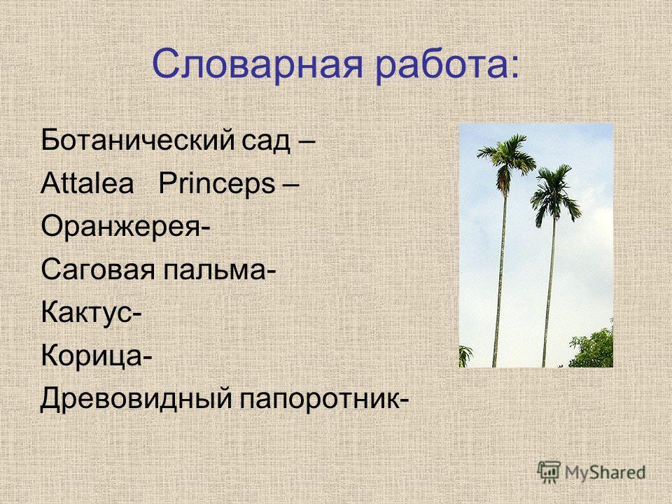 Словарная работа: Ботанический сад – Attalea Prinсeps – Оранжерея- Саговая пальма- Кактус- Корица- Древовидный папоротник-
