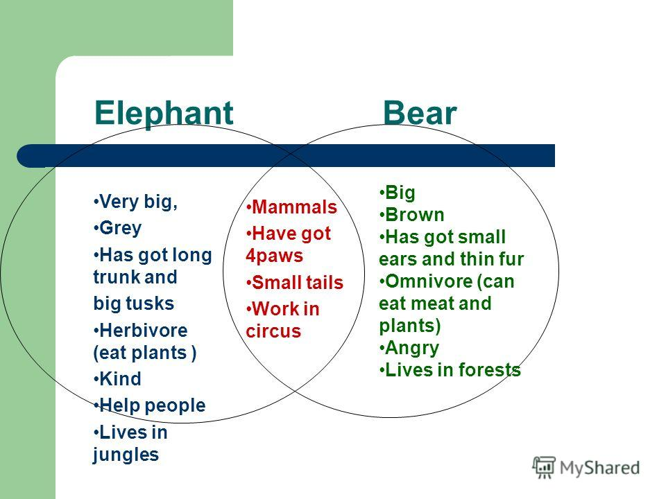 Elephant Bear Very big, Grey Has got long trunk and big tusks Herbivore (eat plants ) Kind Help people Lives in jungles Mammals Have got 4paws Small tails Work in circus Big Brown Has got small ears and thin fur Omnivore (can eat meat and plants) Ang