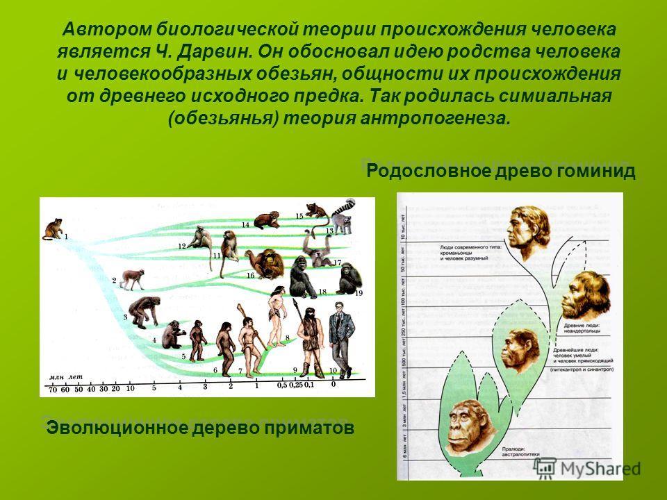 Автором биологической теории происхождения человека является Ч. Дарвин. Он обосновал идею родства человека и человекообразных обезьян, общности их происхождения от древнего исходного предка. Так родилась симиальная (обезьянья) теория антропогенеза. Э