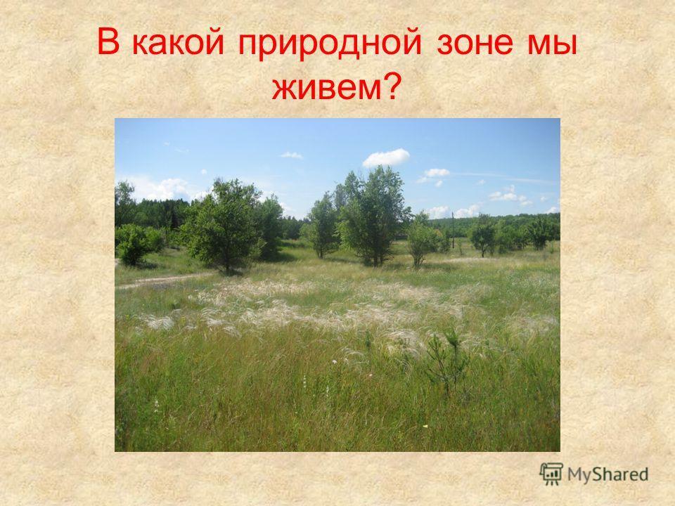В какой природной зоне мы живем?