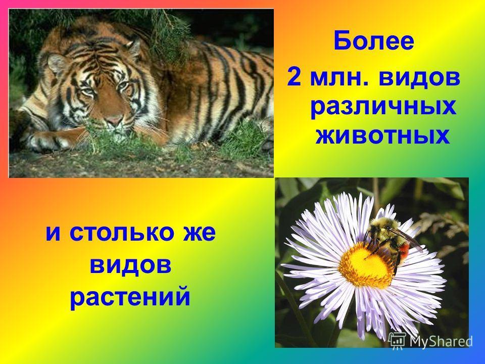 Более 2 млн. видов различных животных и столько же видов растений