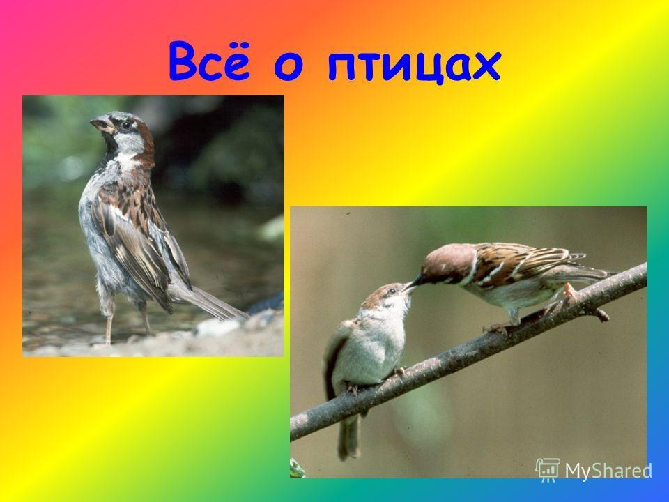 Всё о птицах