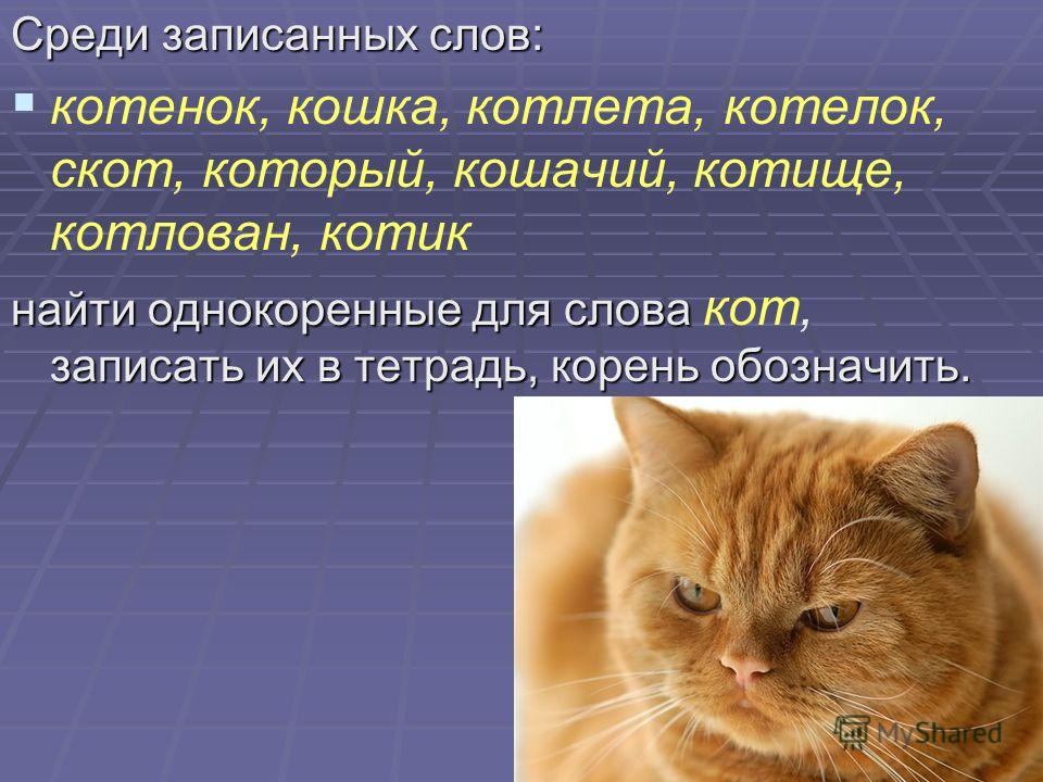 Среди записанных слов: котенок, кошка, котлета, котелок, скот, который, кошачий, котище, котлован, котик найти однокоренные для слова записать их в тетрадь, корень обозначить. найти однокоренные для слова кот, записать их в тетрадь, корень обозначить