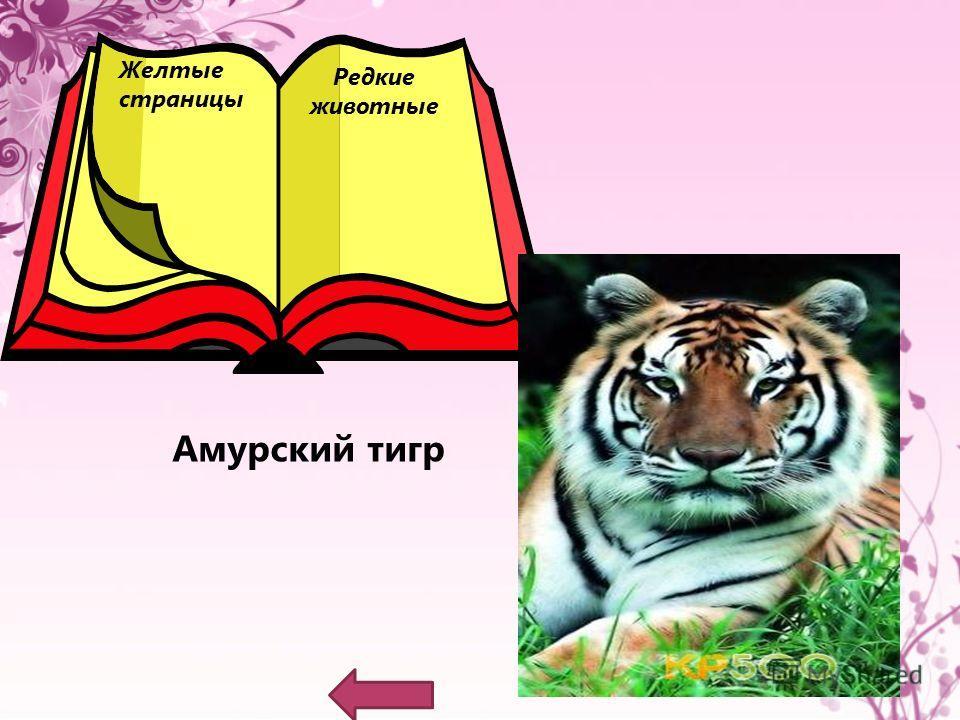 Красные страницы Погибающие животные Снежный барс (ирбис)