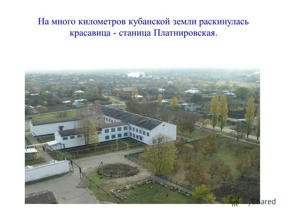 На много километров кубанской земли раскинулась красавица - станица Платнировская.