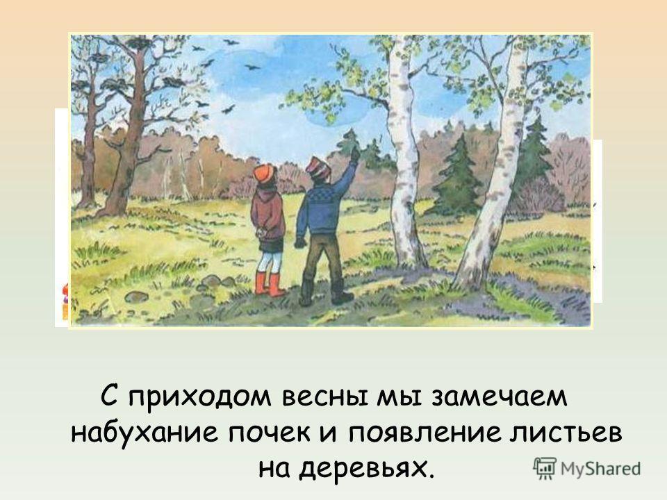 Работа в парах. С приходом весны мы замечаем набухание почек и появление листьев на деревьях.
