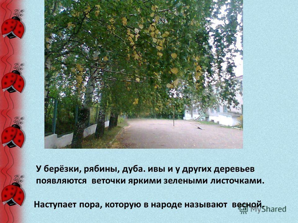 У берёзки, рябины, дуба. ивы и у других деревьев появляются веточки яркими зелеными листочками. Наступает пора, которую в народе называют весной.