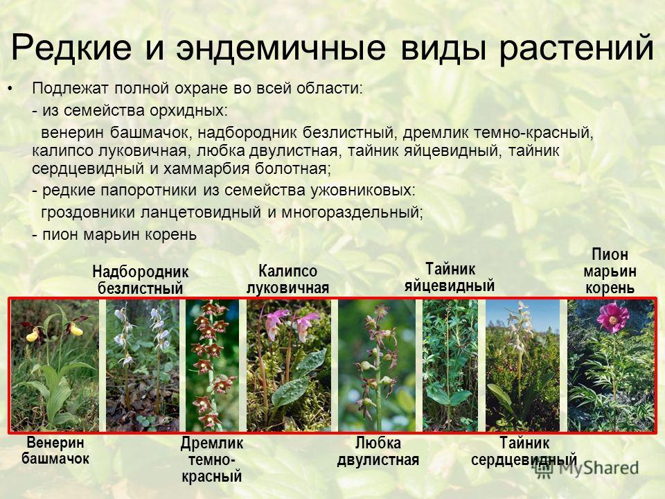 Редкие и эндемичные виды растений Подлежат полной охране во всей области: - из семейства орхидных: венерин башмачок, надбородник безлистный, дремлик темно-красный, калипсо луковичная, любка двулистная, тайник яйцевидный, тайник сердцевидный и хаммарб