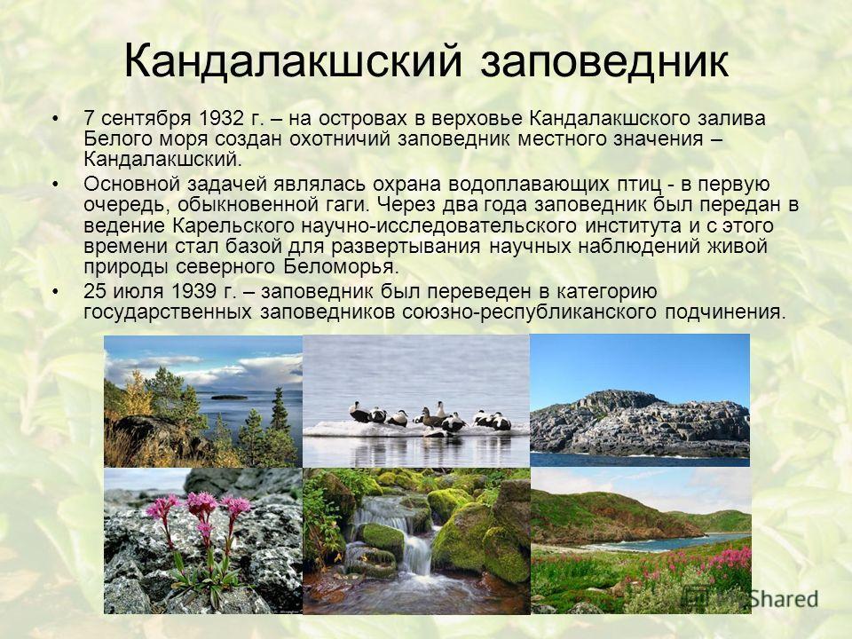 Кандалакшский заповедник 7 сентября 1932 г. – на островах в верховье Кандалакшского залива Белого моря создан охотничий заповедник местного значения – Кандалакшский. Основной задачей являлась охрана водоплавающих птиц - в первую очередь, обыкновенной