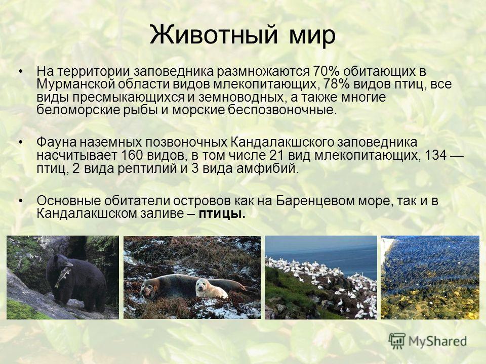 Животный мир На территории заповедника размножаются 70% обитающих в Мурманской области видов млекопитающих, 78% видов птиц, все виды пресмыкающихся и земноводных, а также многие беломорские рыбы и морские беспозвоночные. Фауна наземных позвоночных Ка