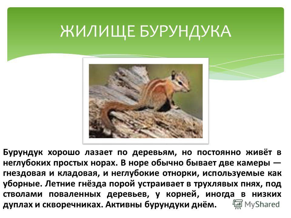 Бурундук хорошо лазает по деревьям, но постоянно живёт в неглубоких простых норах. В норе обычно бывает две камеры гнездовая и кладовая, и неглубокие отнорки, используемые как уборные. Летние гнёзда порой устраивает в трухлявых пнях, под стволами пов