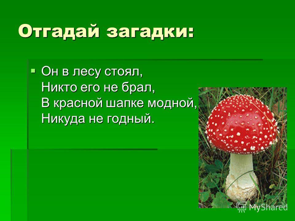 Отгадай загадки: Он в лесу стоял, Никто его не брал, В красной шапке модной, Никуда не годный. Он в лесу стоял, Никто его не брал, В красной шапке модной, Никуда не годный.