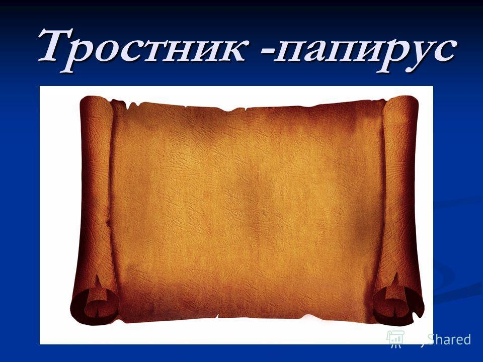 Тростник -папирус