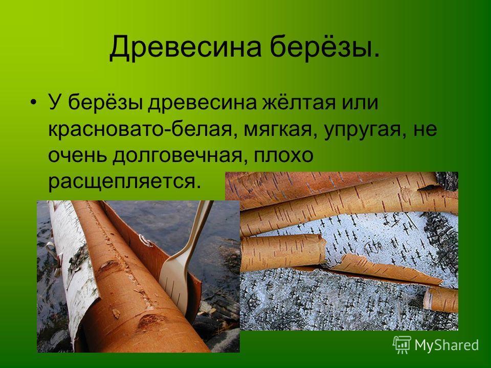 Древесина берёзы. У берёзы древесина жёлтая или красновато-белая, мягкая, упругая, не очень долговечная, плохо расщепляется.