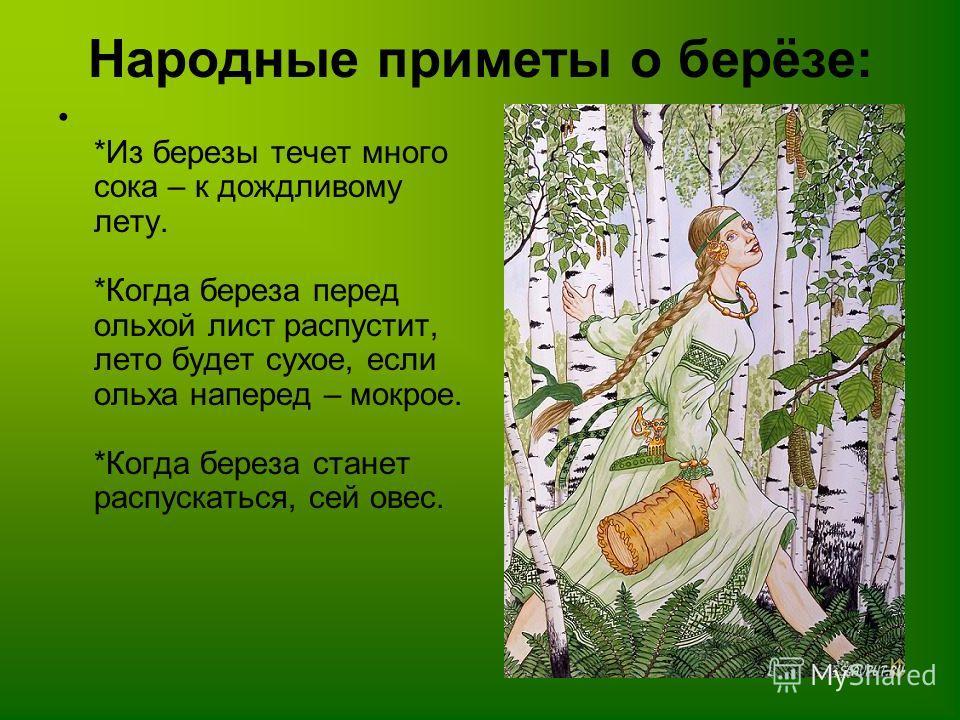 Народные приметы о берёзе: *Из березы течет много сока – к дождливому лету. *Когда береза перед ольхой лист распустит, лето будет сухое, если ольха наперед – мокрое. *Когда береза станет распускаться, сей овес.