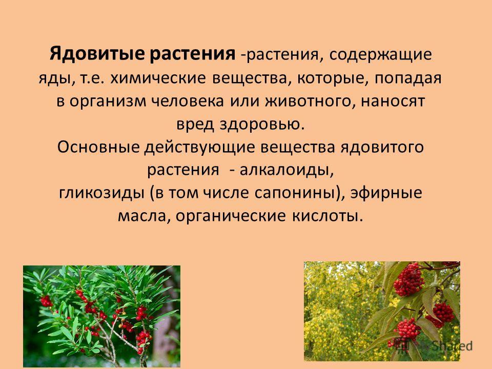 Ядовитые растения -растения, содержащие яды, т.е. химические вещества, которые, попадая в организм человека или животного, наносят вред здоровью. Основные действующие вещества ядовитого растения - алкалоиды, гликозиды (в том числе сапонины), эфирные