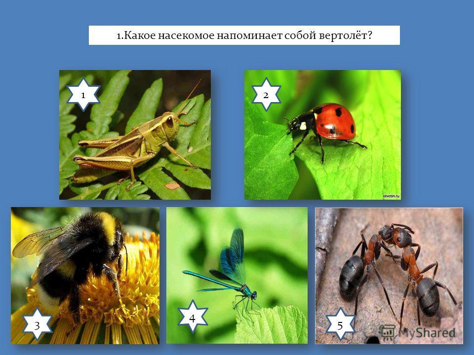 12 3 4 5 1.Какое насекомое напоминает собой вертолёт?