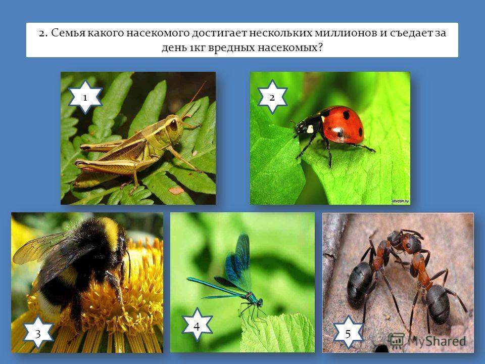 12 3 4 5 2. Семья какого насекомого достигает нескольких миллионов и съедает за день 1кг вредных насекомых?