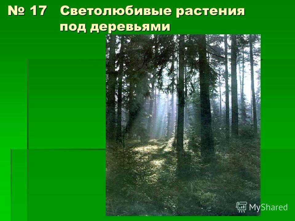 17 Светолюбивые растения под деревьями 17 Светолюбивые растения под деревьями