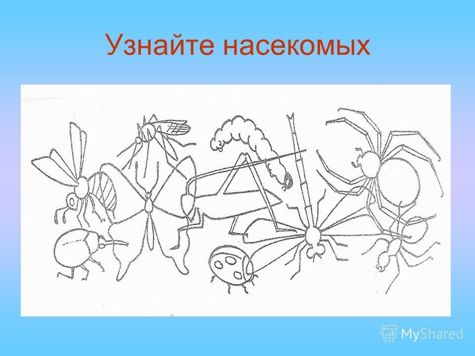 Узнайте насекомых