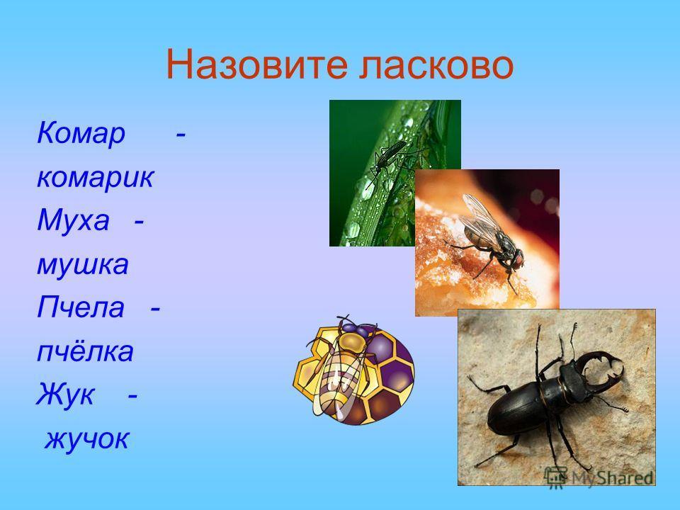Назовите ласково Комар - комарик Муха - мушка Пчела - пчёлка Жук - жучок