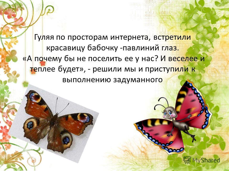 Гуляя по просторам интернета, встретили красавицу бабочку -павлиний глаз. «А почему бы не поселить ее у нас? И веселее и теплее будет», - решили мы и приступили к выполнению задуманного