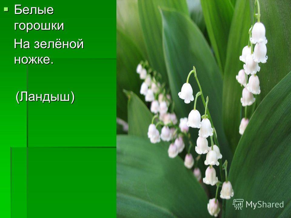 Белые горошки Белые горошки На зелёной ножке. На зелёной ножке.(Ландыш)
