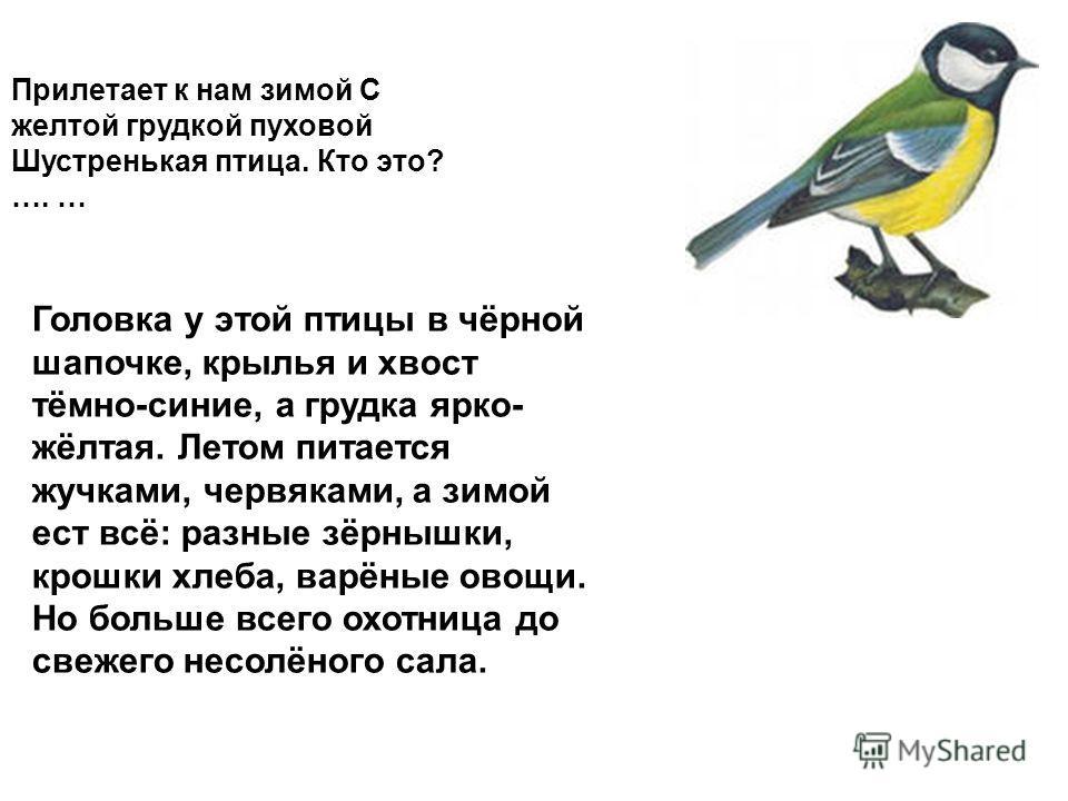 Прилетает к нам зимой С желтой грудкой пуховой Шустренькая птица. Кто это? …. … Головка у этой птицы в чёрной шапочке, крылья и хвост тёмно-синие, а грудка ярко- жёлтая. Летом питается жучками, червяками, а зимой ест всё: разные зёрнышки, крошки хлеб