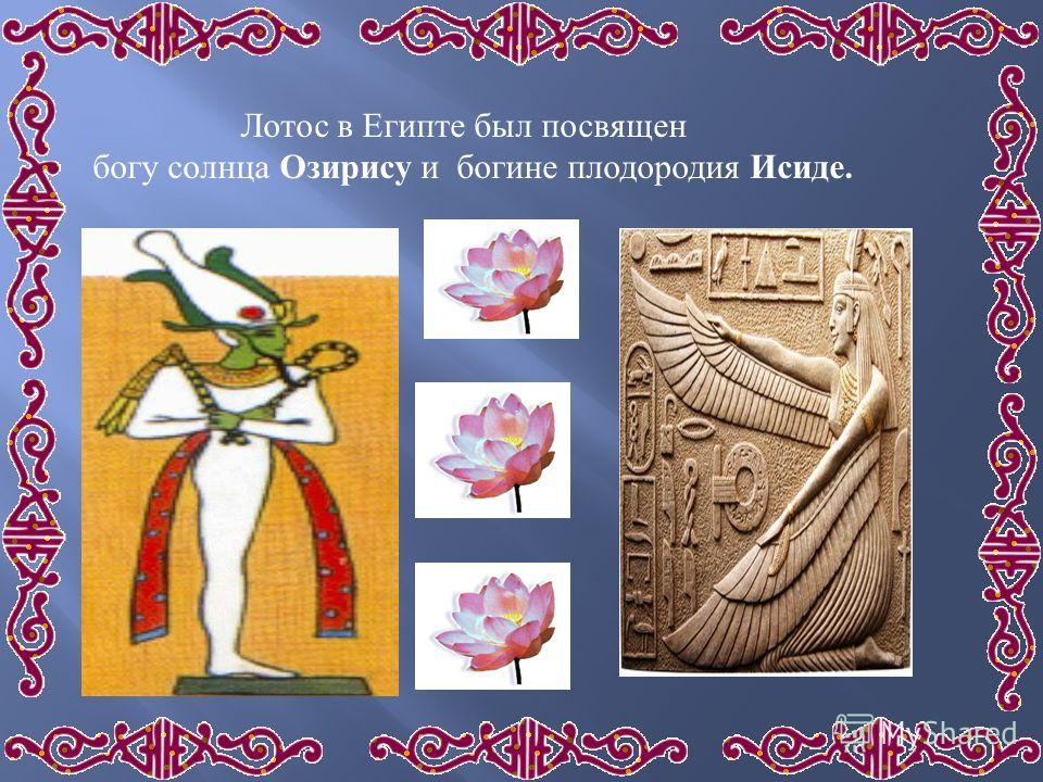 Лотос в Египте был посвящен богу солнца Озирису и богине плодородия Исиде.