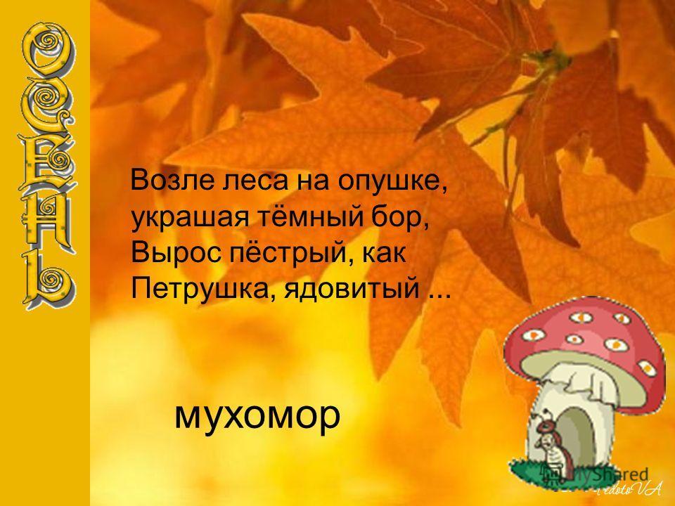 мухомор Возле леса на опушке, украшая тёмный бор, Вырос пёстрый, как Петрушка, ядовитый...