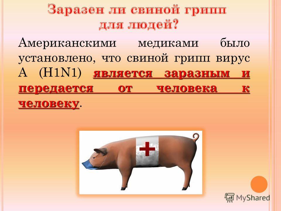 является заразным и передается от человека к человеку Американскими медиками было установлено, что свиной грипп вирус А (Н1N1) является заразным и передается от человека к человеку.