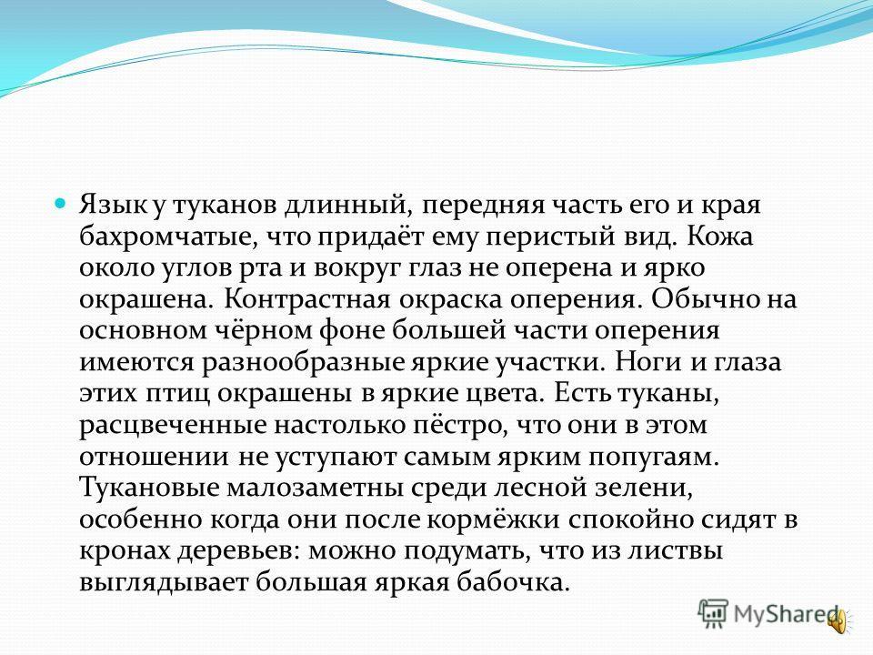 У ТУКАНОВ КРАСИВЫЙ ГОЛОС.