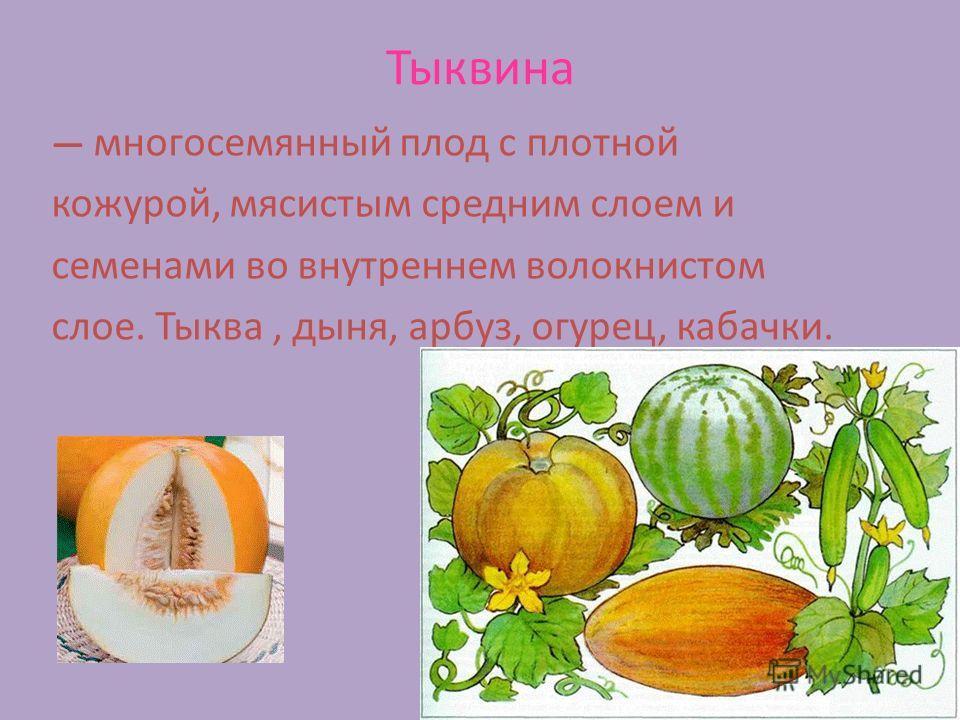 Тыквина многосемянный плод с плотной кожурой, мясистым средним слоем и семенами во внутреннем волокнистом слое. Тыква, дыня, арбуз, огурец, кабачки.
