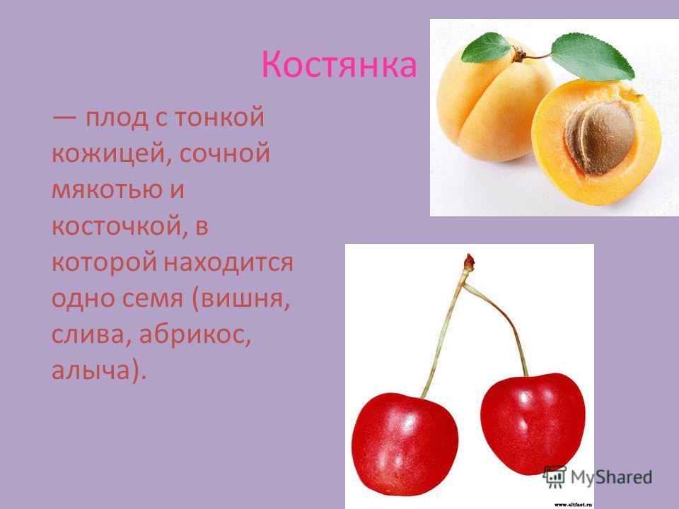 Костянка плод с тонкой кожицей, сочной мякотью и косточкой, в которой находится одно семя (вишня, слива, абрикос, алыча).