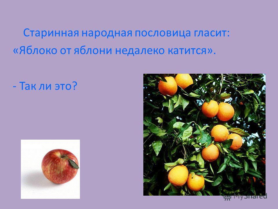 Старинная народная пословица гласит: «Яблоко от яблони недалеко катится». - Так ли это?