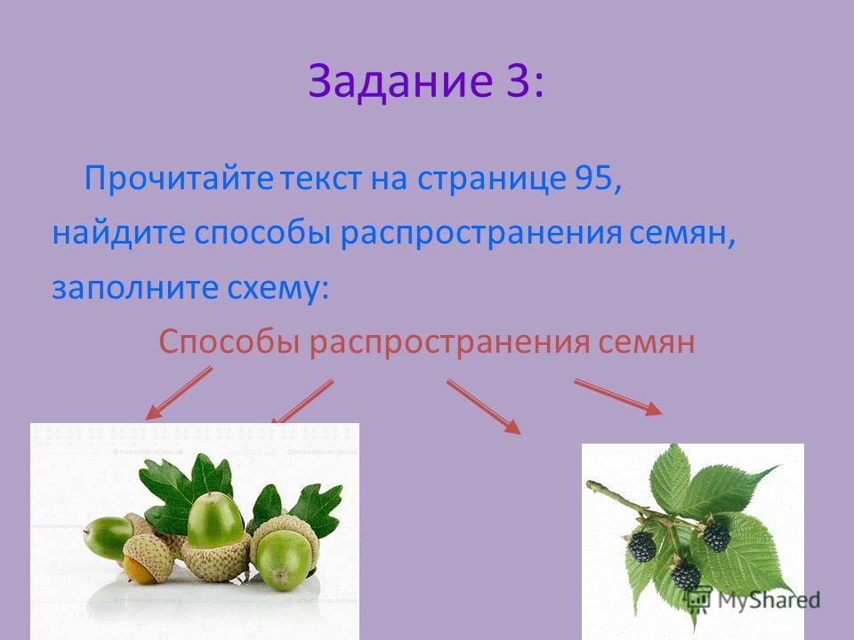 Задание 3: Прочитайте текст на странице 95, найдите способы распространения семян, заполните схему: Способы распространения семян