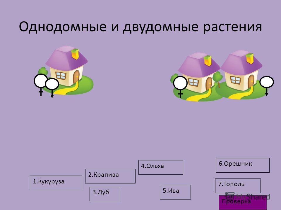 Однодомные и двудомные растения 1.Кукуруза 4.Ольха 3.Дуб 6.Орешник 2.Крапива 5.Ива 7.Тополь Проверка