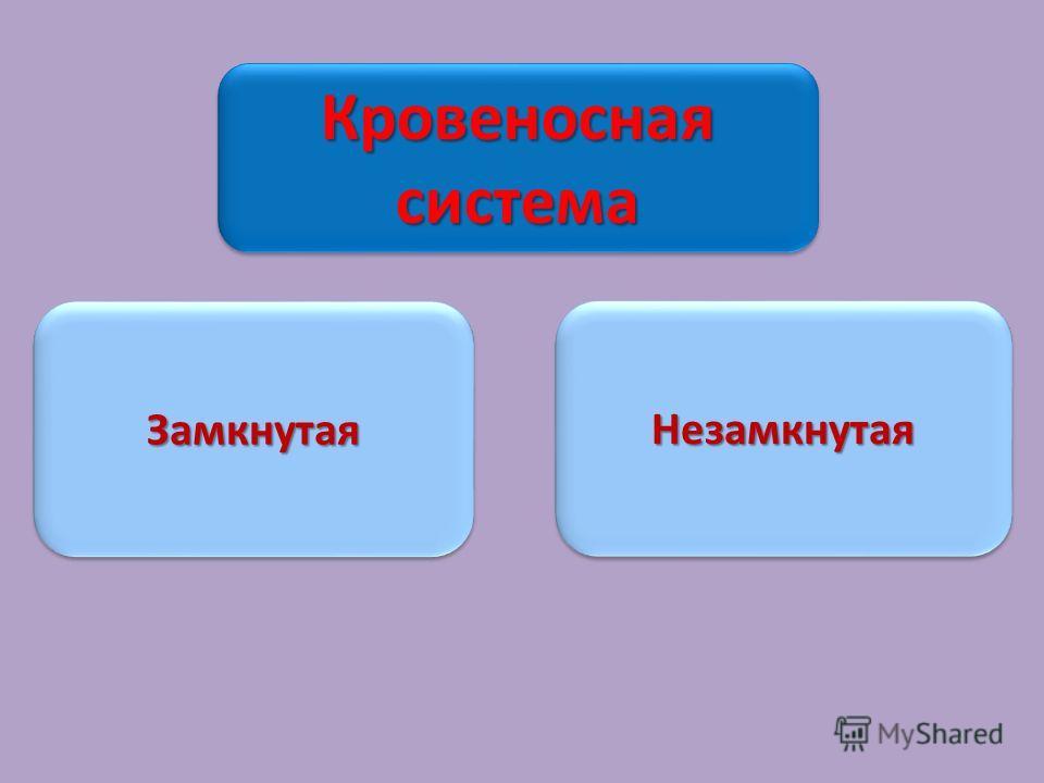Кровеносная система ЗамкнутаяЗамкнутаяНезамкнутаяНезамкнутая