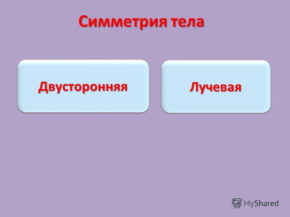 Симметрия тела ЛучеваяЛучевая ДвусторонняяДвусторонняя