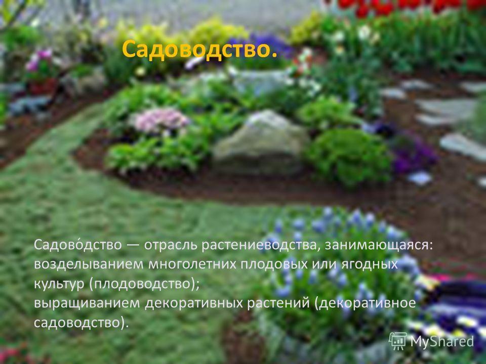 Садоводство. Садово́дство отрасль растениеводства, занимающаяся: возделыванием многолетних плодовых или ягодных культур (плодоводство); выращиванием декоративных растений (декоративное садоводство).
