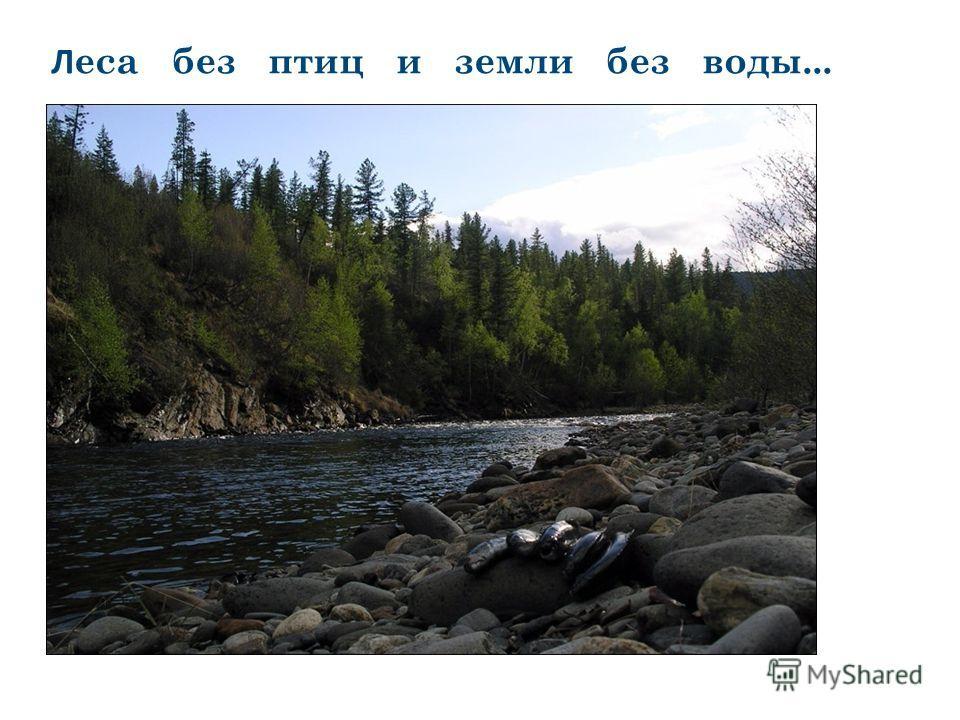 Л еса без птиц и земли без воды...