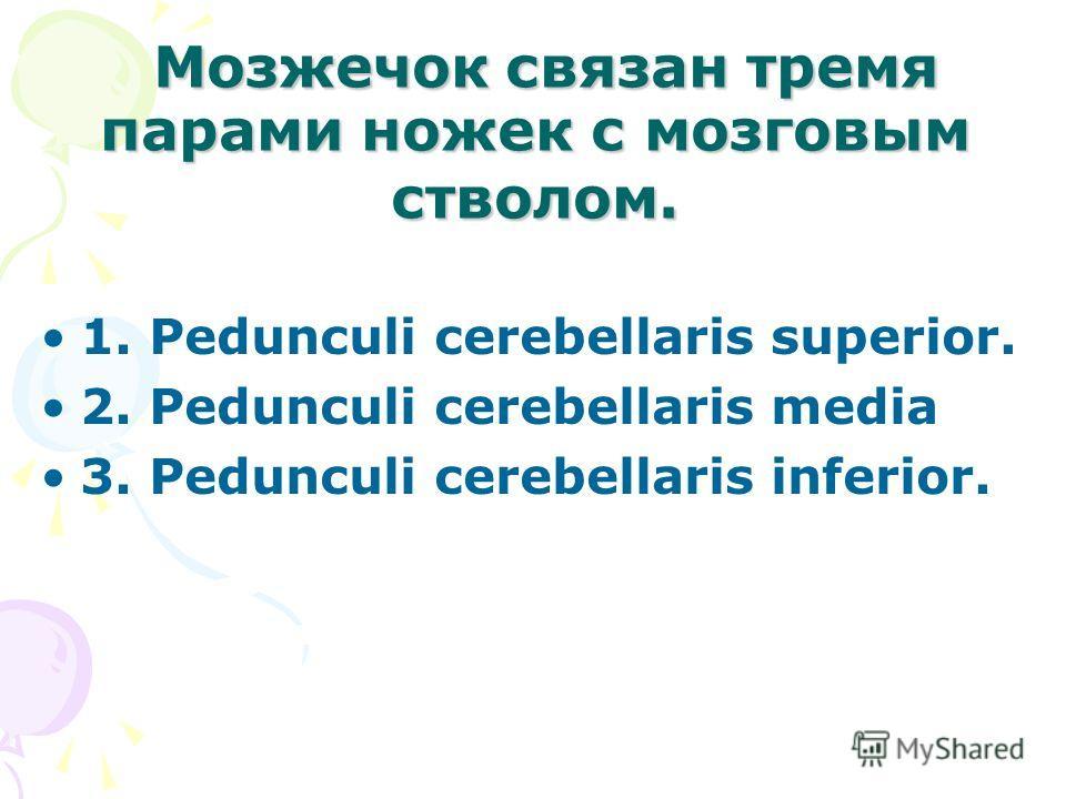 Мозжечок связан тремя парами ножек с мозговым стволом. Мозжечок связан тремя парами ножек с мозговым стволом. 1. Pedunculi cerebellaris superior. 2. Pedunculi cerebellaris media 3. Pedunculi cerebellaris inferior.