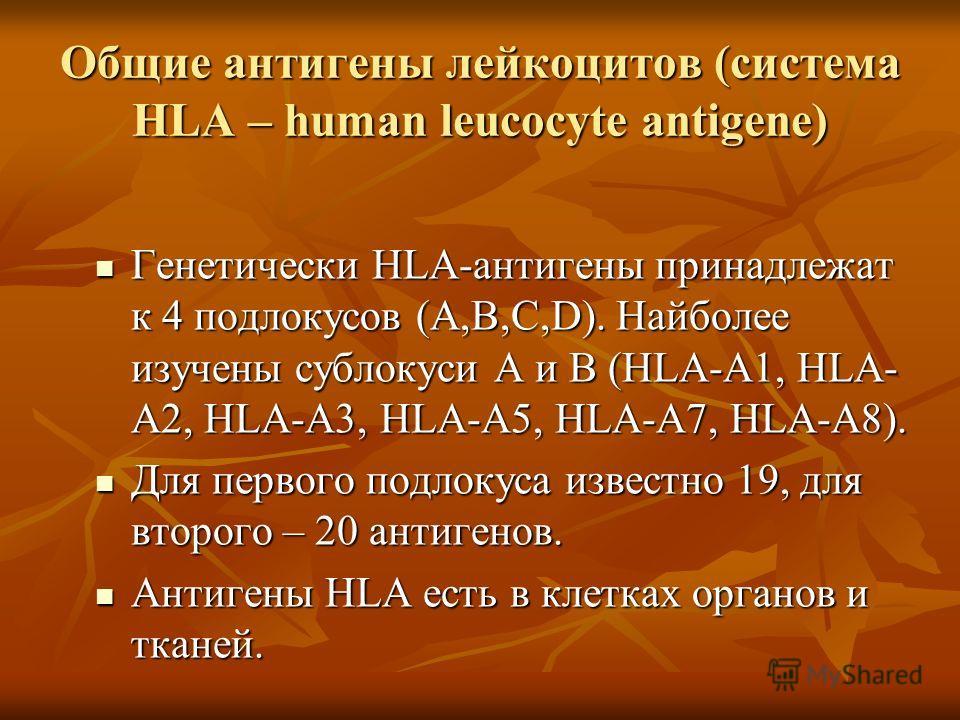 Общие антигены лейкоцитов (система HLA – human leucocyte antigene) Генетически HLA-антигены принадлежат к 4 подлокусов (А,В,С,D). Найболее изучены сублокуси А и В (HLA-А1, HLA- А2, HLA-А3, HLA-А5, HLA-А7, HLA-А8). Генетически HLA-антигены принадлежат