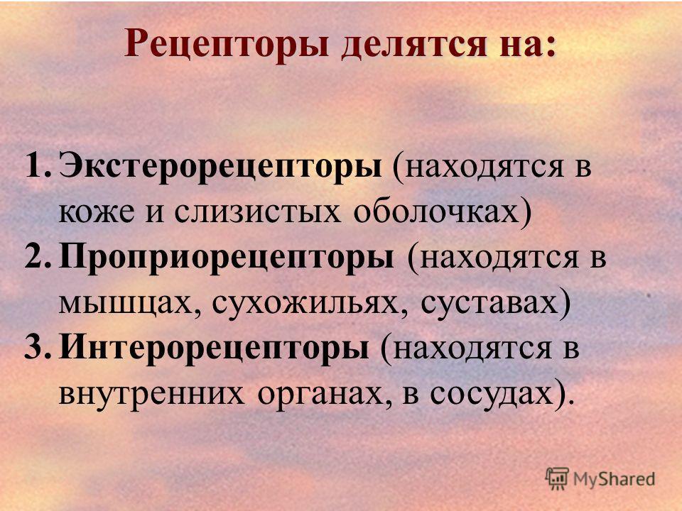Рецепторы делятся на: 1.Экстерорецепторы (находятся в коже и слизистых оболочках) 2.Проприорецепторы (находятся в мышцах, сухожильях, суставах) 3.Интерорецепторы (находятся в внутренних органах, в сосудах).