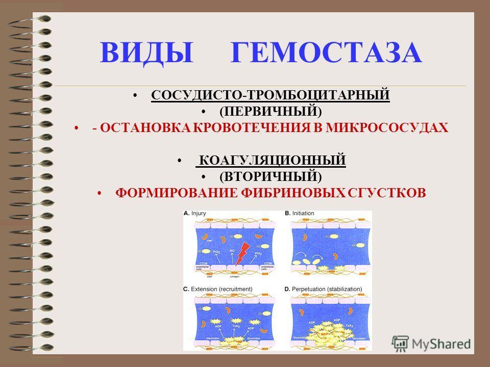ВИДЫ ГЕМОСТАЗА СОСУДИСТО-ТРОМБОЦИТАРНЫЙ (ПЕРВИЧНЫЙ) - ОСТАНОВКА КРОВОТЕЧЕНИЯ В МИКРОСОСУДАХ КОАГУЛЯЦИОННЫЙ (ВТОРИЧНЫЙ) ФОРМИРОВАНИЕ ФИБРИНОВЫХ СГУСТКОВ