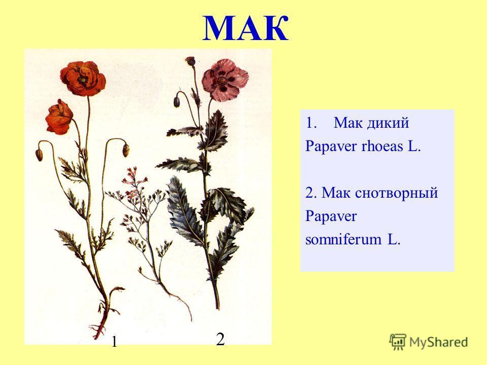 МАК 1.Мак дикий Papaver rhoeas L. 2. Мак снотворный Papaver somniferum L. 2 1