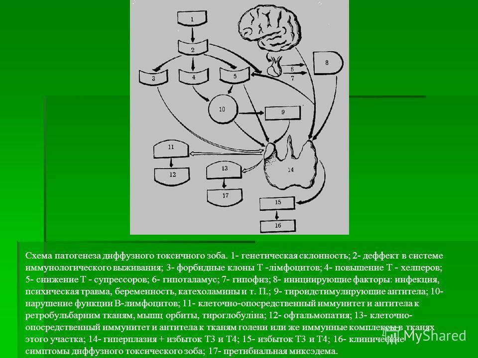Схема патогенеза диффузного токсичного зоба. 1- генетическая склонность; 2- деффект в системе иммунологического выживания; 3- форбидные клоны Т -лімфоцитов; 4- повышение Т - хелперов; 5- снижение Т - супрессоров; 6- гипоталамус; 7- гипофиз; 8- иниции