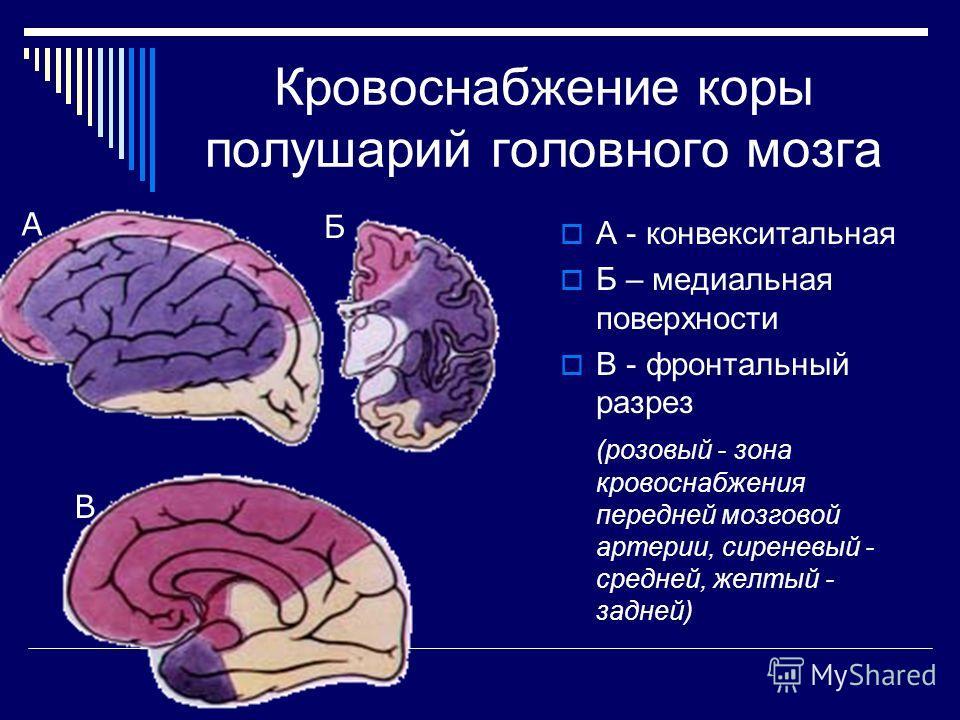 Кровоснабжение коры полушарий головного мозга А - конвекситальная Б – медиальная поверхности В - фронтальный разрез (розовый - зона кровоснабжения передней мозговой артерии, сиреневый - средней, желтый - задней) А Б В