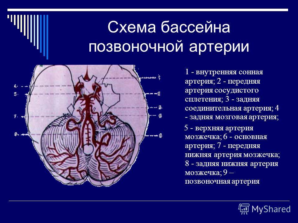 Схема бассейна позвоночной артерии 1 - внутренняя сонная артерия; 2 - передняя артерия сосудистого сплетения; 3 - задняя соединительная артерия; 4 - задняя мозговая артерия; 5 - верхняя артерия мозжечка; 6 - основная артерия; 7 - передняя нижняя арте