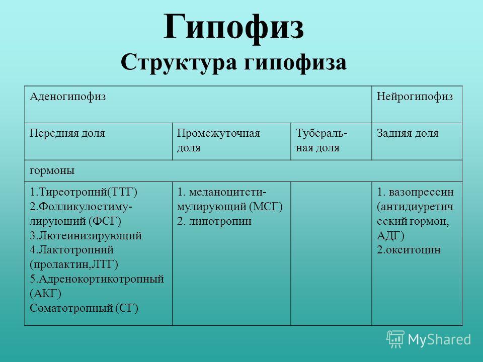 Гипофиз Структура гипофиза АденогипофизНейрогипофиз Передняя доляПромежуточная доля Тубераль- ная доля Задняя доля гормоны 1.Тиреотропнй(ТТГ) 2.Фолликулостиму- лирующий (ФСГ) 3.Лютеинизирующий 4.Лактотропний (пролактин,ЛТГ) 5.Адренокортикотропный (АК